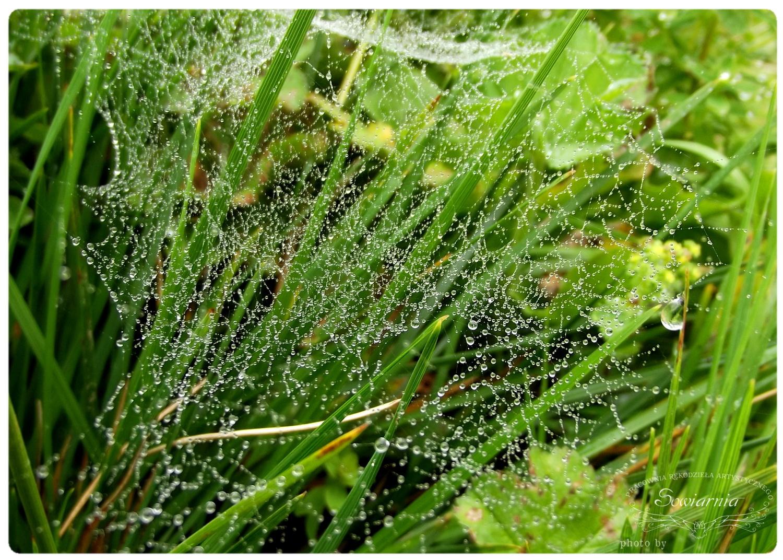 krople deszczu na pajęczynie