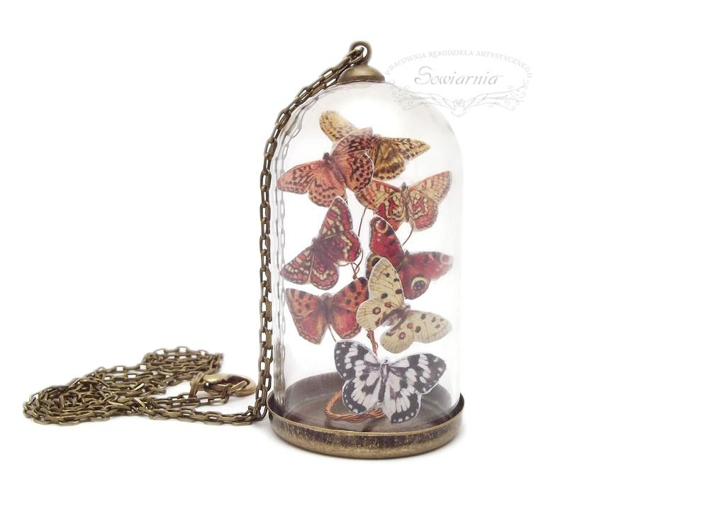 motyle zamknięte pod szkłem
