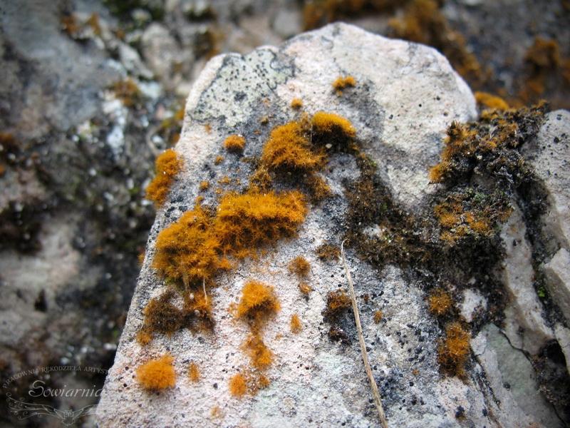 rudy mech na kamieniu