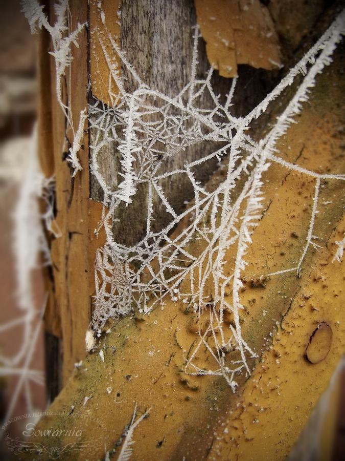 zamrożona pajęczyna