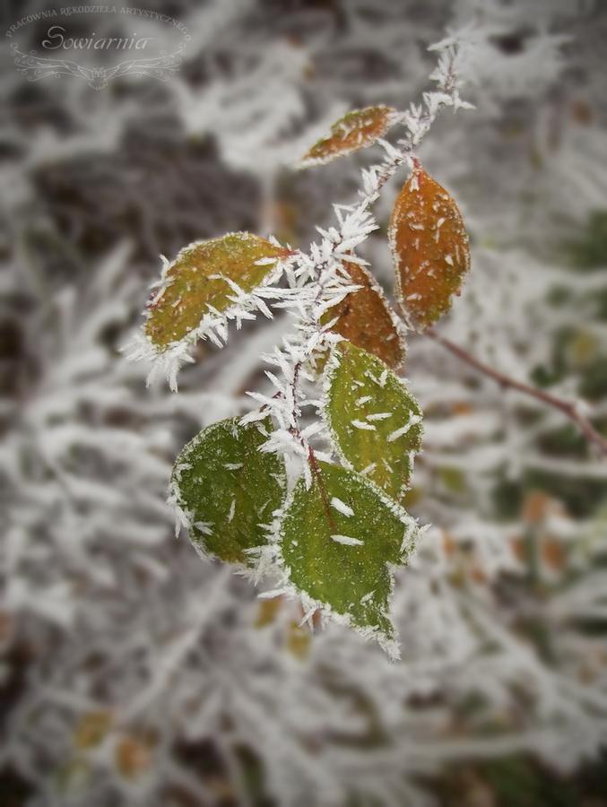 zamrożone liście