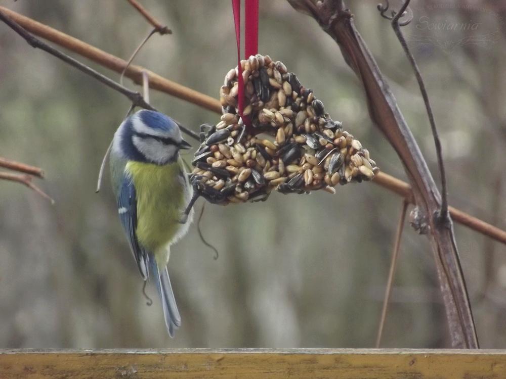 zawieszki dla ptaków na zimę