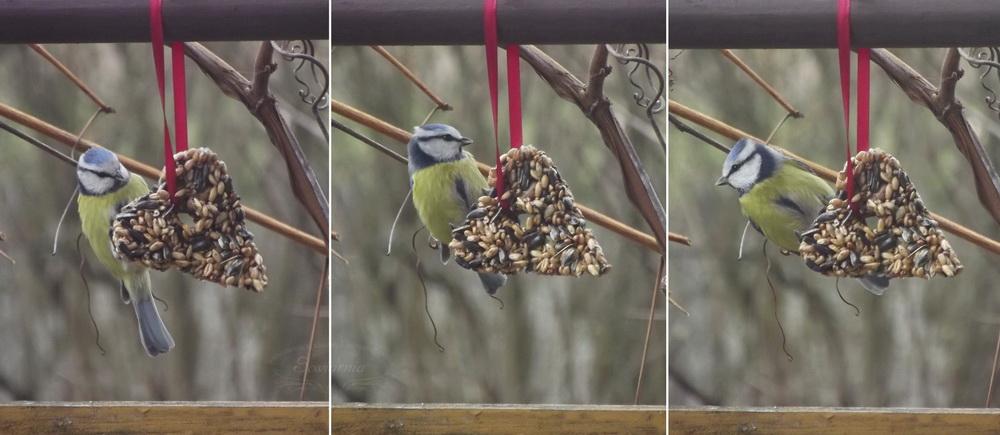 serce z karmy dla ptaków