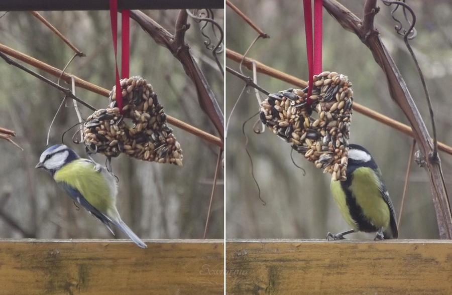 zawieszki dla ptaków