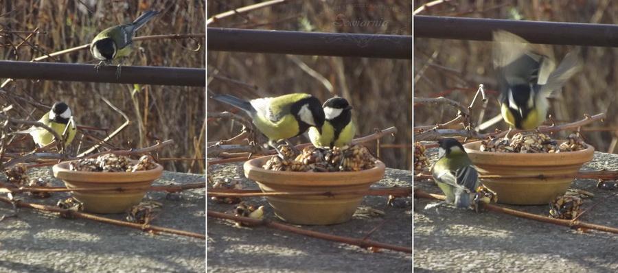 kostki z ziarna dla ptaków