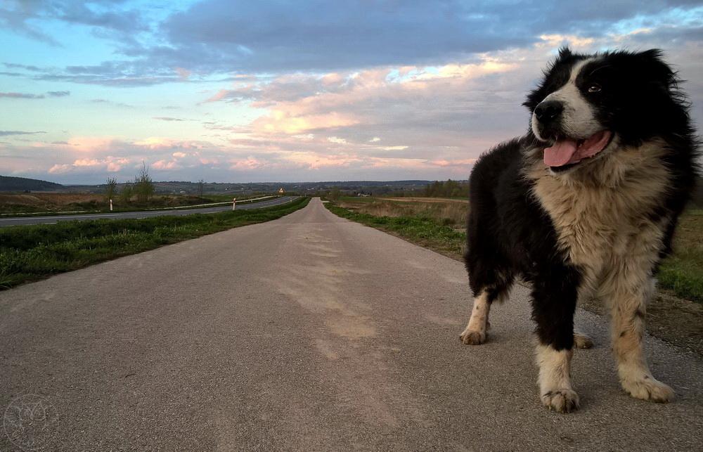 pies w obiektywie