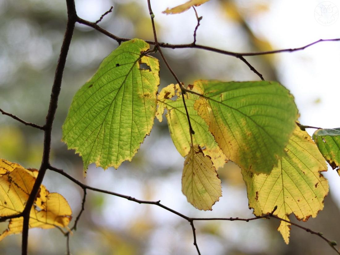 listopadowe liście