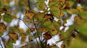 Listopadowe liście :)