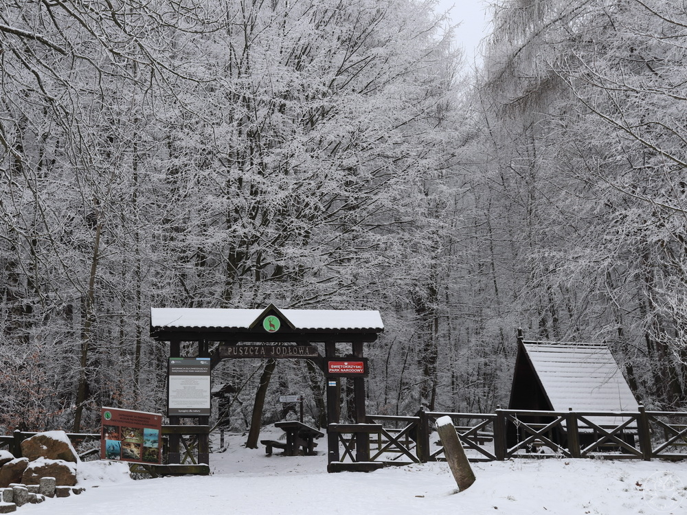zimowa puszcza jodłowa