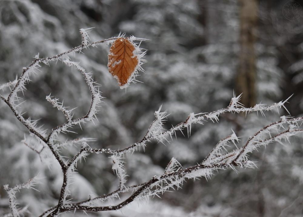 zimowe gałązki