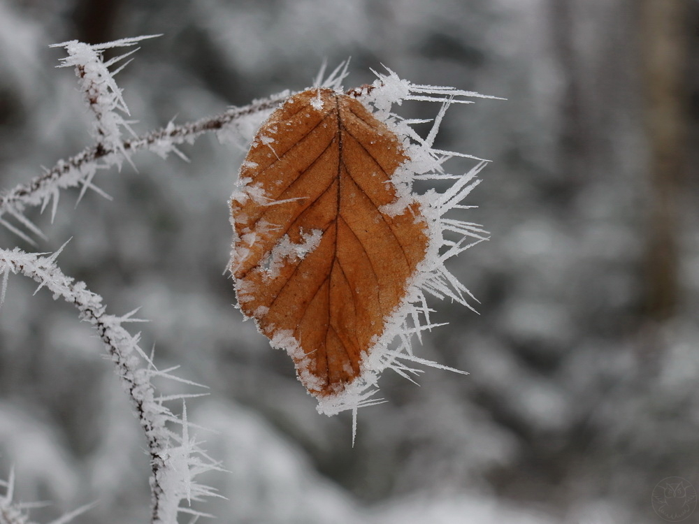 zimowy listek