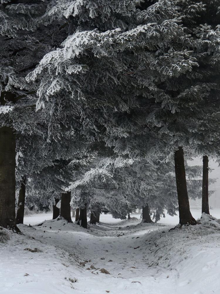 zimowy spacer w obiektywie