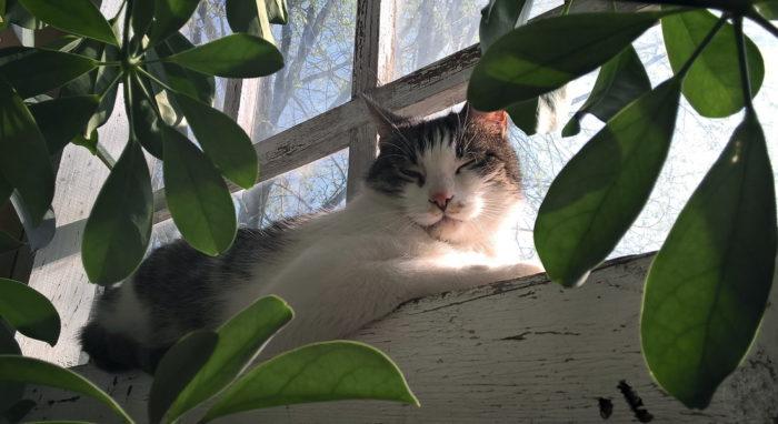 porcja kocich zdjęć