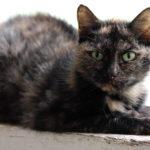 Kocie zdjęcia na Światowy Dzień Kota :-)