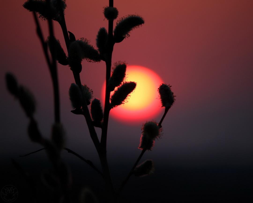 wschód słońca i bazie