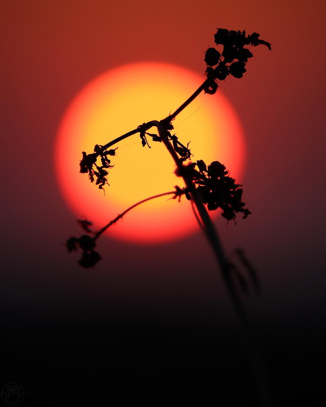 wschód słońca i badyle
