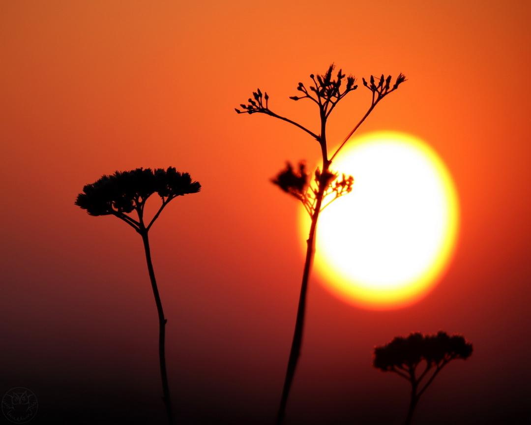 wiosenny wschód słońca i badyle
