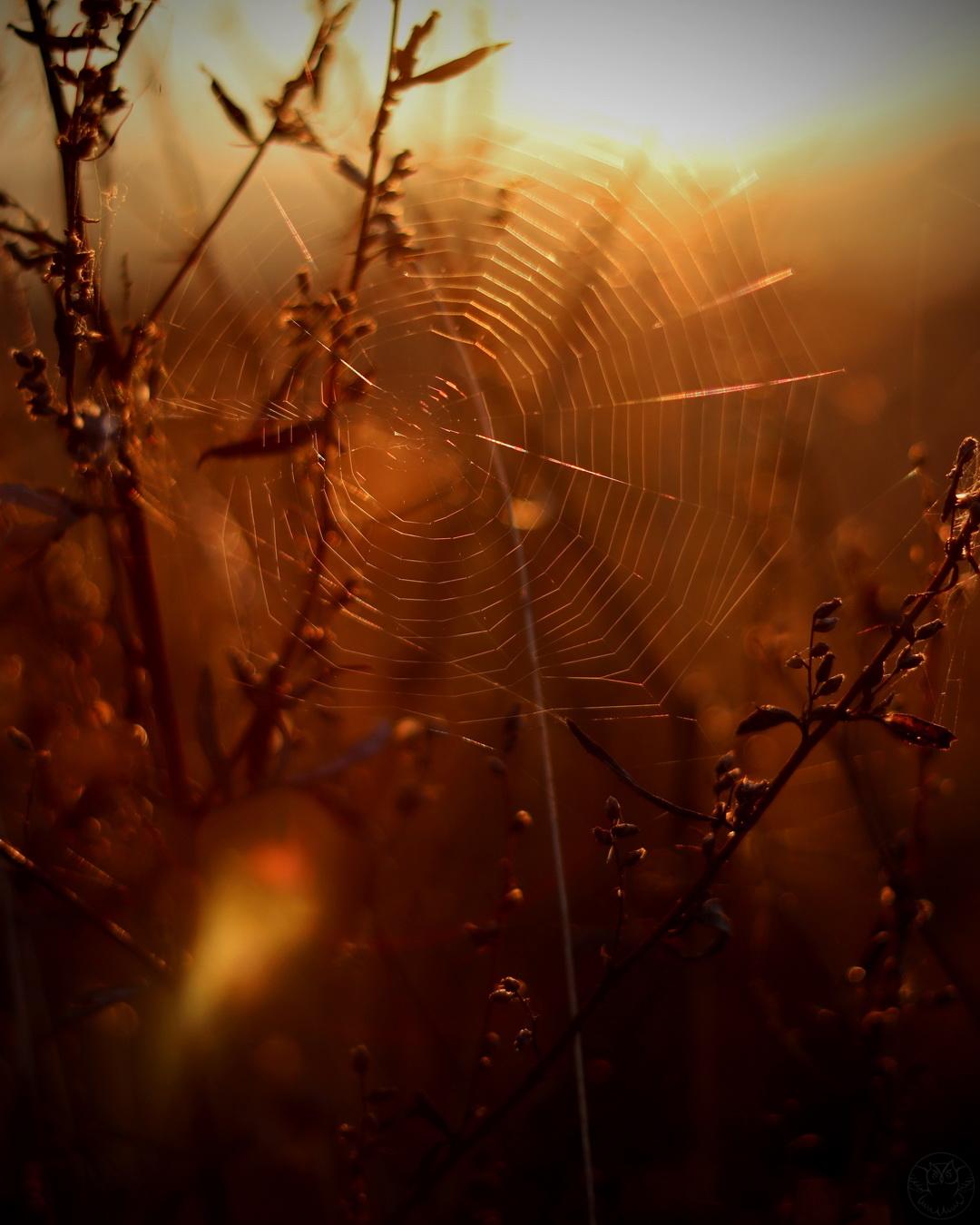 pajęczyna o wschodzie słońca